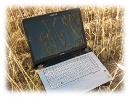 Laptop in wheat field